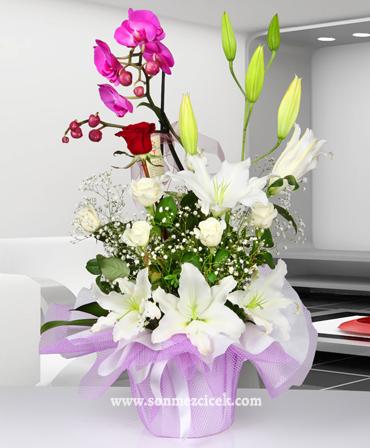 Düþler Ülkesi Phalaenopsis Orkide