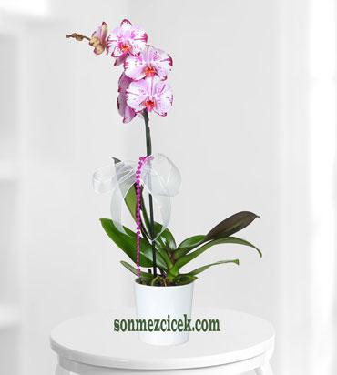 Orkide Sipariþi