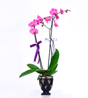 Dekor Seramikte Ýki Dal Mor Orkide