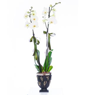 Özel Seramikte 2 Dallý Orkide