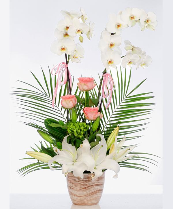 Tasarým Orkide Aranjmaný
