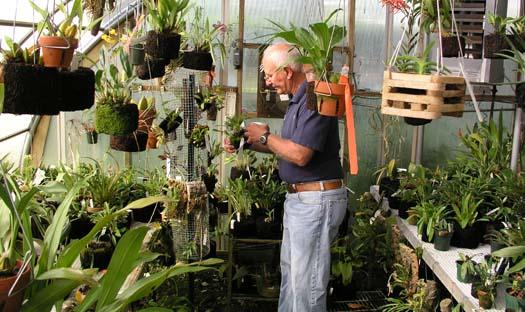 Beş adımda orkide bakımı