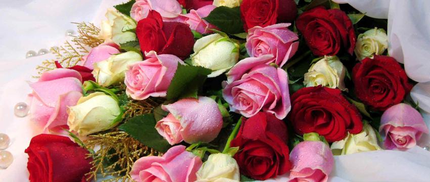 Güller Hakkında