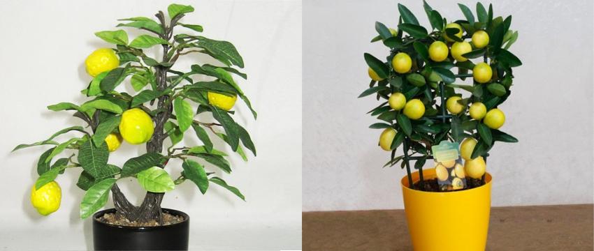 Minyatür Meyve Ağaçları