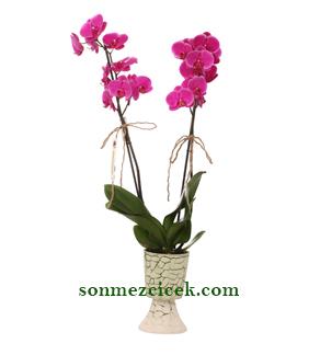 Mor Orkide/Harika Tasarýmlar