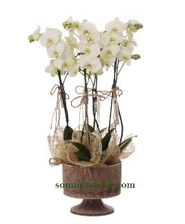 Ayaklý Seramikte 4 Dal Beyaz Orkide